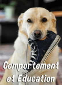 comportement-education-dog-educ-45