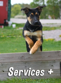 services-complementaires-dog-educ-45